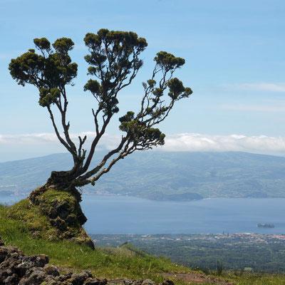 Blick von Pico auf die Insel Faial