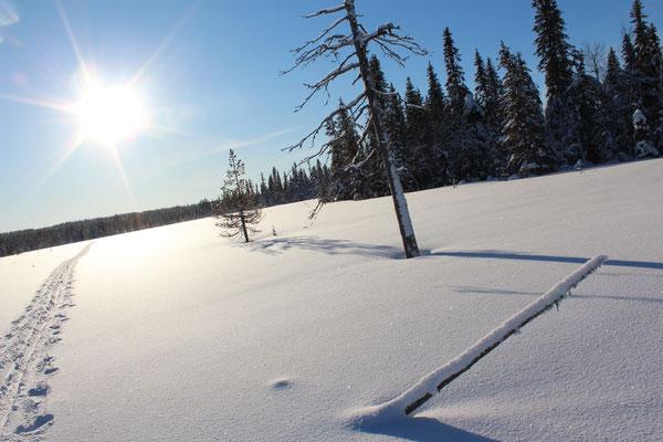 Im Winter kann man auch die grossen Sümpfe problemlos überqueren