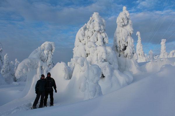 Der Schnee macht aus den Bäumen wunderschöne Skulpturen