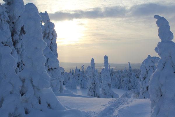 Auf Schneeschuhen durch tief verschneite Wälder