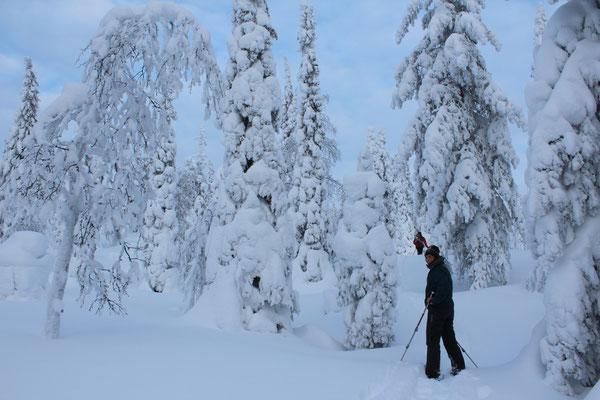Durch den verschneiten Wald, im Vittjåkk Akkanålke Naturreservat