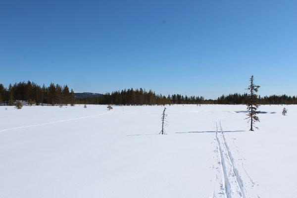 Eine frische Skispur im Schnee