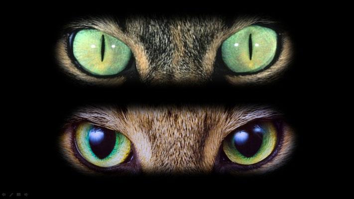 ecoles : cycles 1, 2 et 3, yeux du chat