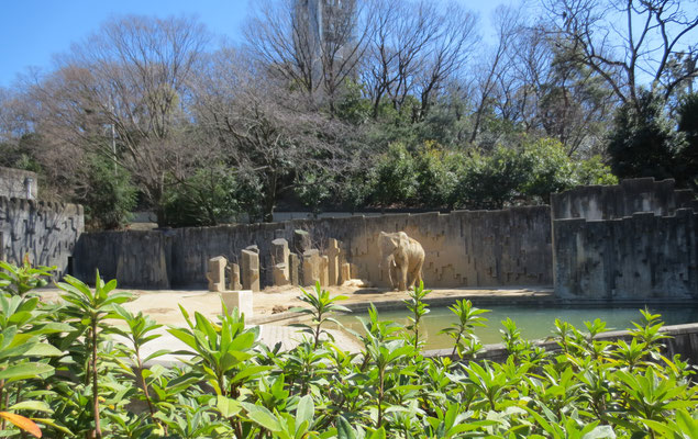 Elephant ゾウ
