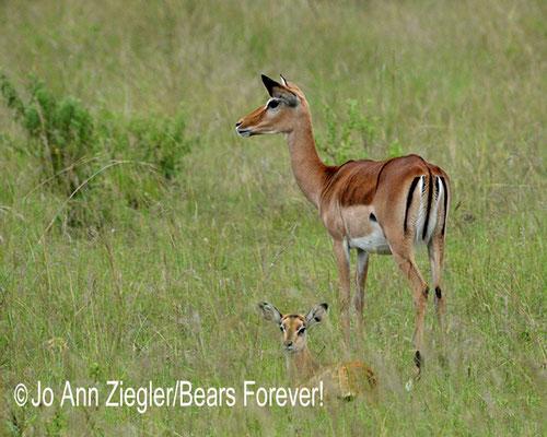 Alert Love, Massa Mara, Kenya, Africa