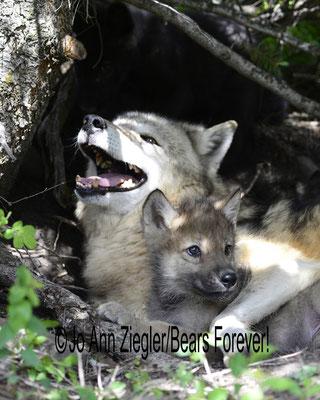 Security - Captive Animal, Montana