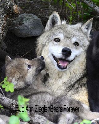 Happiness - Captive Animal, Montana