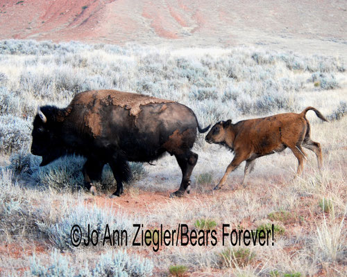 Follow The Leader - Central Wyoming