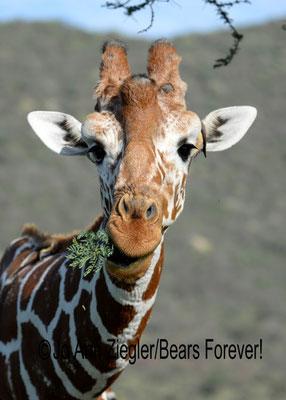 Who, Me? - Kenya, Africa