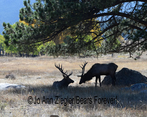 Friendly Meeting - Rocky Mountain National Park, Colorado