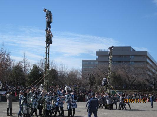 木遣り保存会及び大宮・浦和若鳶会によるはしご乗り