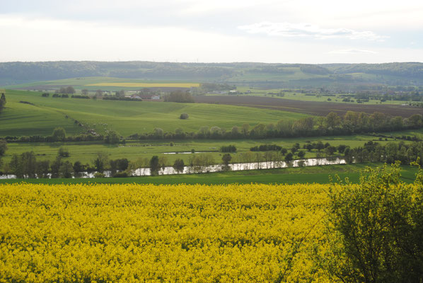 Paysage de Meuse - Champ de Colza