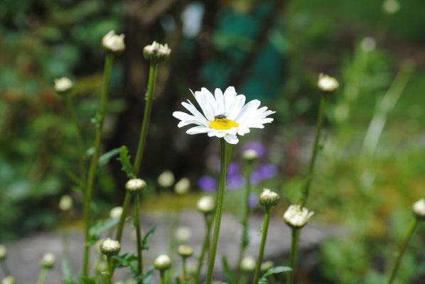 Si vous alliez cueillir un petit bouquet de fleurs des champs
