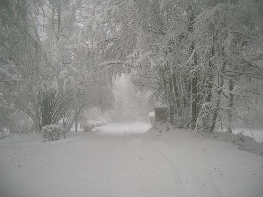 La neige fait le bonheur des amateurs de bonhommes de neige et des skieurs de fond
