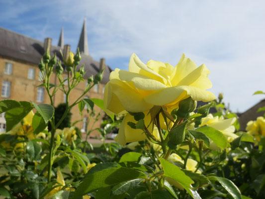 Rose jaune pour souhaiter du bien-être