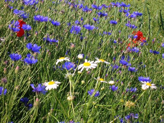 Et si vous alliez cueillir un bouquet de fleurs des champs ?