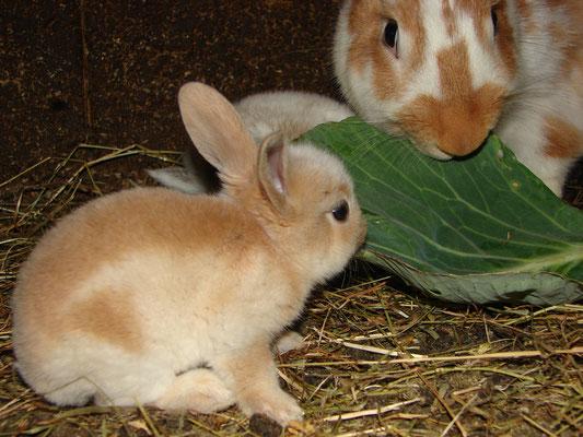En baraques ou dans la nature, vous verrez des lapins