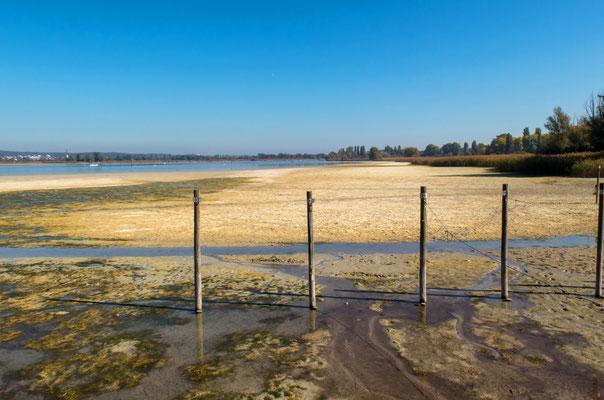 Weite Schlickflächen im Ermatingerbecken, 14. 10. 2014  Pegel 296