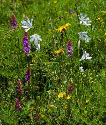 Weisse Trichterlilie mit Orchiden und Arnika