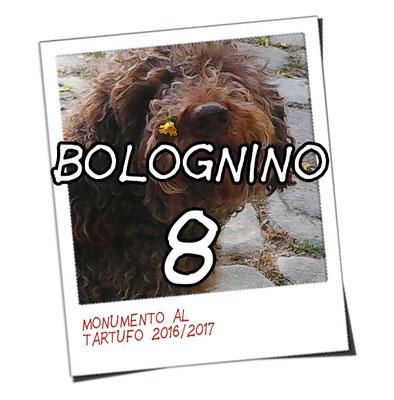 bolognino 8 - Monica D.
