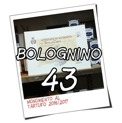 bolognino 43