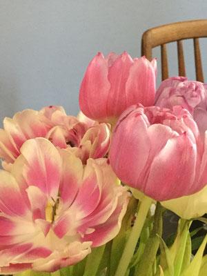 Tulen Tulips aus der Blumenladen Speyer