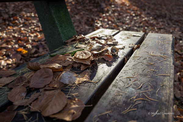 Herbstlaub im Volkspark Hamburg