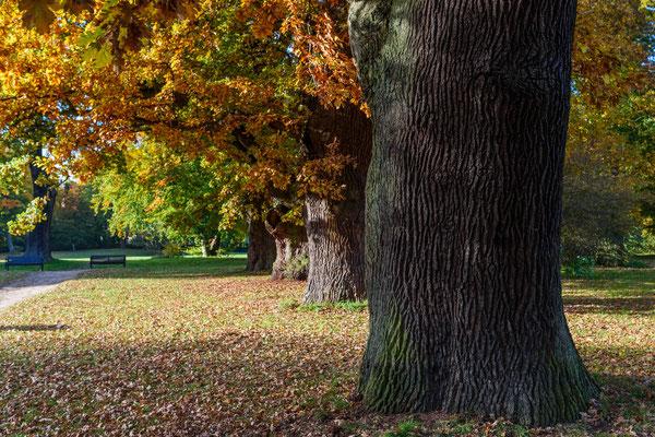 Herbst im Jenischpark Hamburg