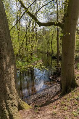 Auewanderweg im Wittmoor