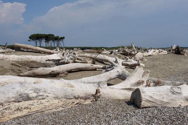 Am Strand von Eboli / Salerno, Kampanien / Italien