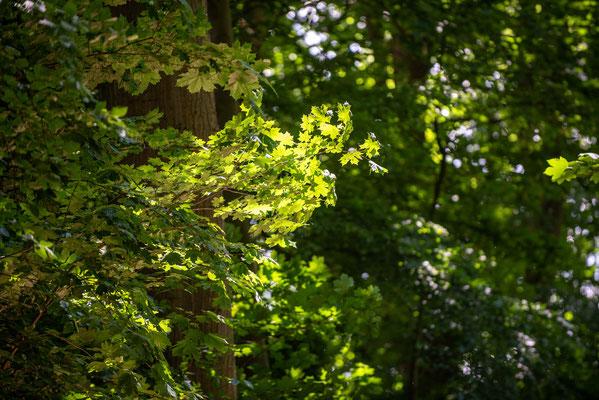 Sonnenstrahlen im Hirschpark