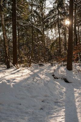 Volkspark im Winter