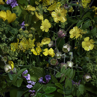 "T.M. Glass, ""Buttercups and other Wild Flowers,"" 2020, archival pigment print on hand-made Italian rag paper, 18 x 18"" (also available in: 30 x 30"", 42 x 42"", 52 x 52""; 58 x 58"",) contact for price"