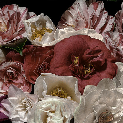 "T.M. Glass, ""Camelias,"" 2020, archival pigment print on hand-made Italian rag paper, 18 x 18"" (also available in: 30 x 30"", 42 x 42"", 52 x 52""; 58 x 58"",) contact for price"