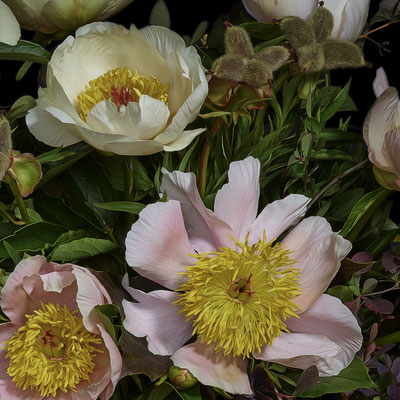 "T.M. Glass, ""Hybrid Peonies and Barberry,"" 2020, archival pigment print on hand-made Italian rag paper, 18 x 18"" (also available in: 30 x 30"", 42 x 42"", 52 x 52""; 58 x 58"",) contact for price"