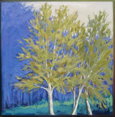 "Margaret Gerding, ""Birches in Spring III,"" 2015, oil on panel, 16 x 16 inches, $2,500"