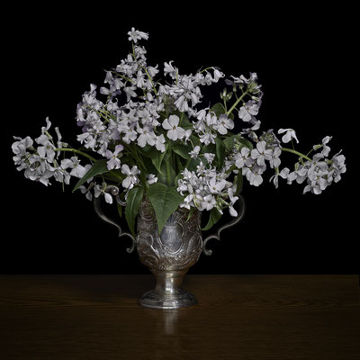 """T.M. Glass, """"Woodland Scilla and Phlox in a Silver Cup,"""" 2020, Archival Pigment Print, Available in: 30 x 30""""; 42 x 42""""; 52 x 52""""; 58 x 58"""", contact for price"""