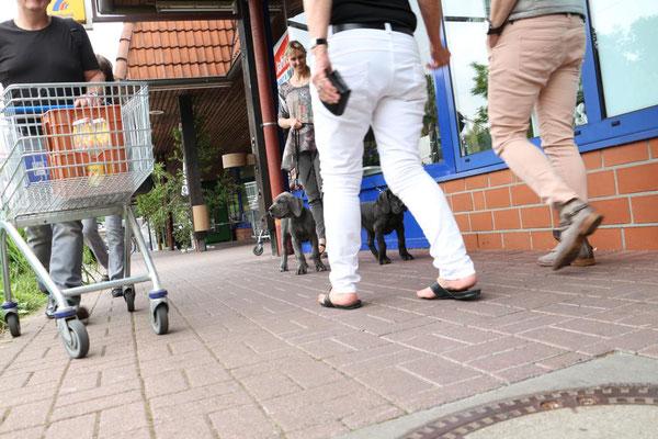 Sozialisation Deutsche Doggen Welpen