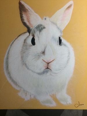 portrait pastel de lapin