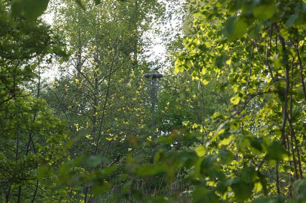 zicht op de ooievaars vanuit het huis van Ilse en Siebe