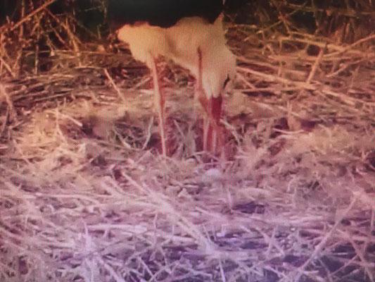 27 maart: screenshot Jonathan - een eerste ei