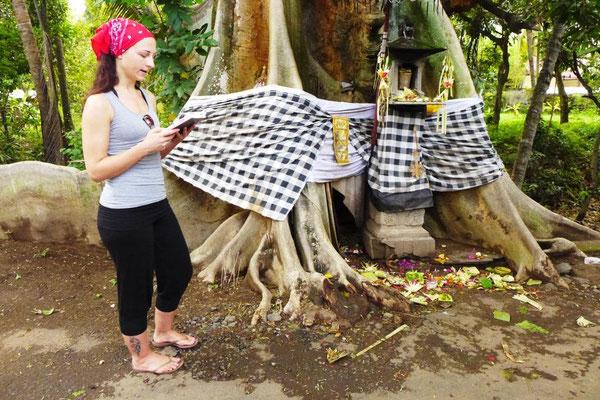 Bodhi Baum im Dorf
