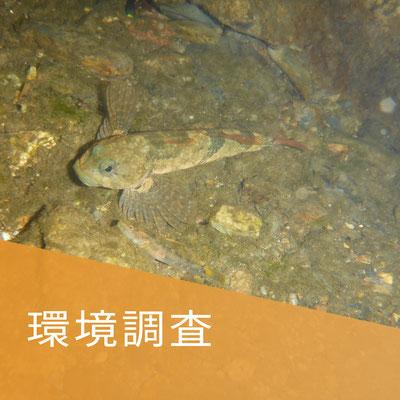 環境調査事業の写真