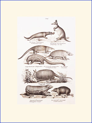 Platypus, pangolin and anteater
