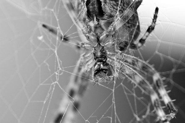 Schwarz-Weiß-Fotoprojekt by Thomas Heck, Grafikdesigner, Karlsruhe – Spiders Home