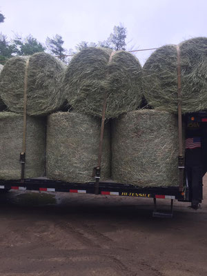 2019 Round Bales $80 each picked up in Strafford, approx. 550 lbs.