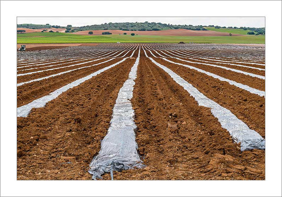 Agricultura bajo plástico