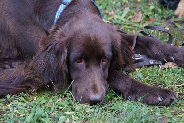 Die Jagdhunde suchten sich ein ruhiges Plätzchen im Schlosshof und erholten sich von der Jagd.