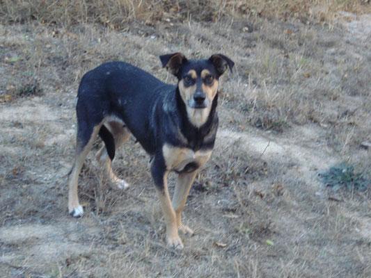JOSY ... war einer der besten Hunde überhaupt - und wurde von Unbekannten vergiftet! Unsere Tränen sind endlich versiegt, aber wir tragen Dich für immer in unseren Herzen, Du Wunder auf 4 Pfoten, Du...