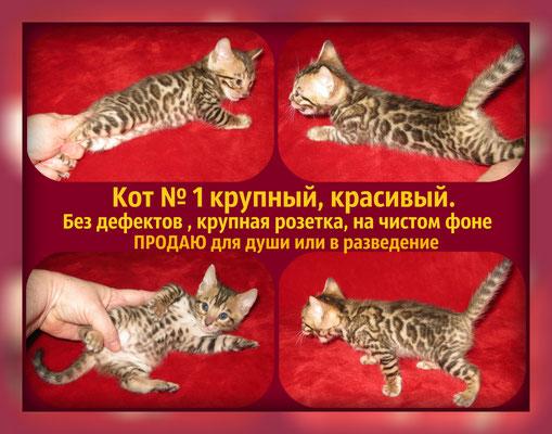 Цена котика 20 т.р.